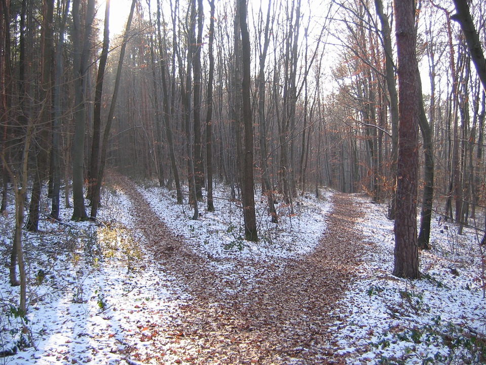 forest-path-238887_960_720